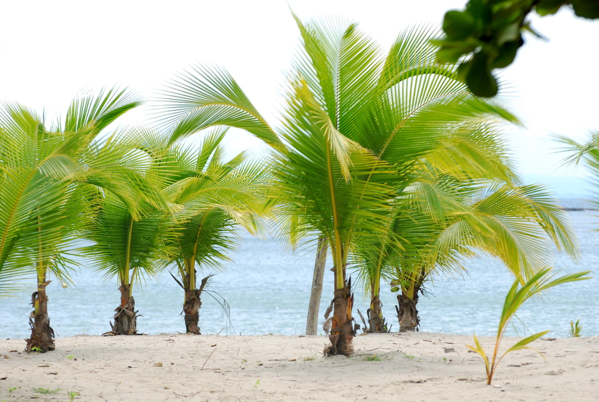 Young Palm Trees Images on Tropical Beach