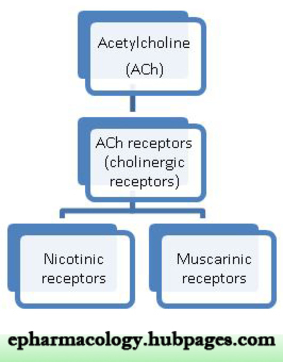 Acetylcholine works on both muscarinic and nicotinic receptors
