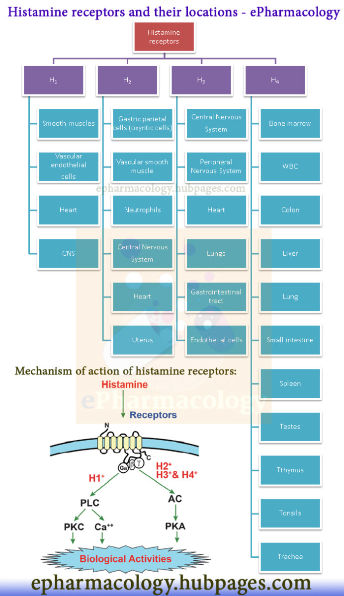 Histamine receptor: subtypes, locations and mechanism of action