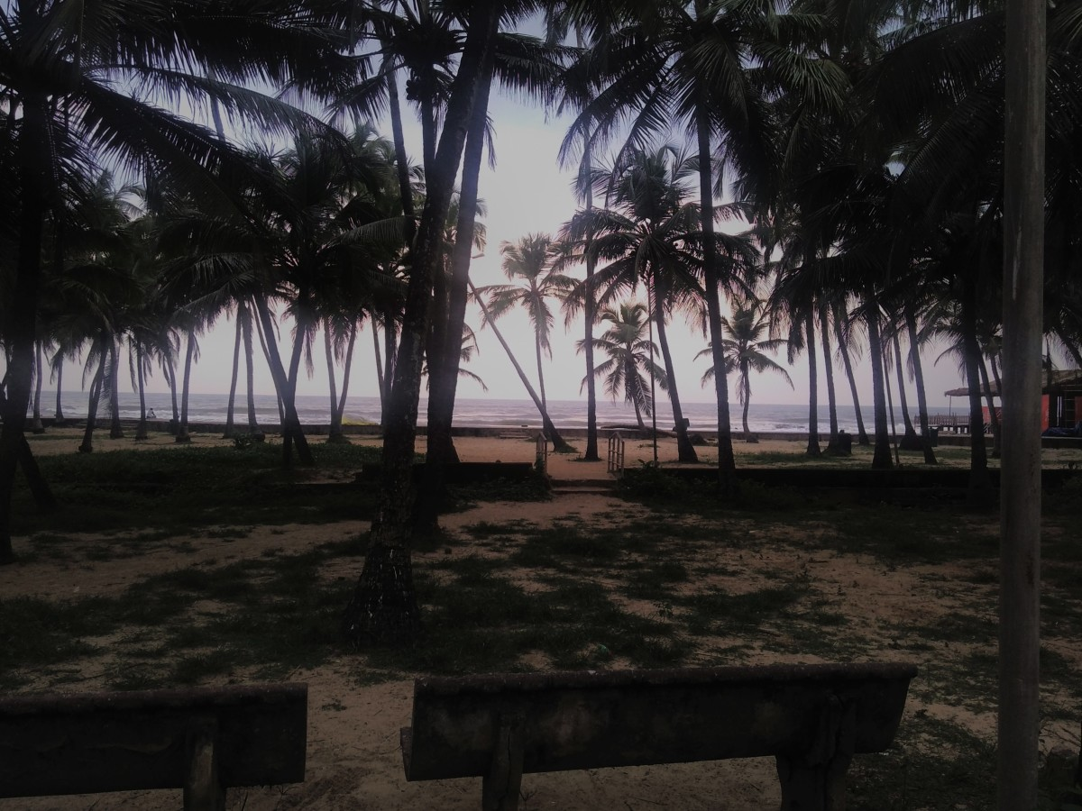 The shore is rich with coconut palms. An ideal place to relax.