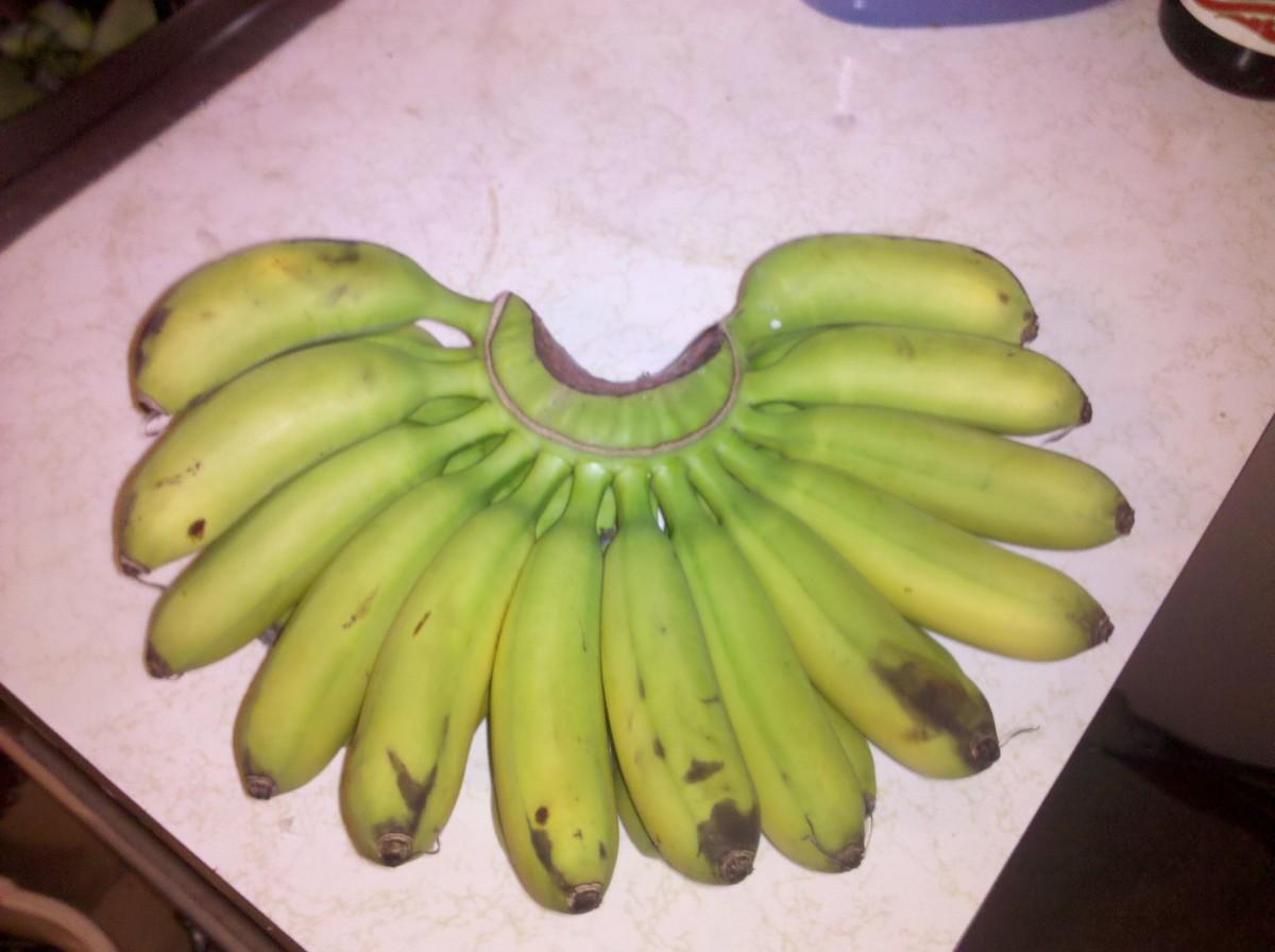 Unripened Small Green Bananas