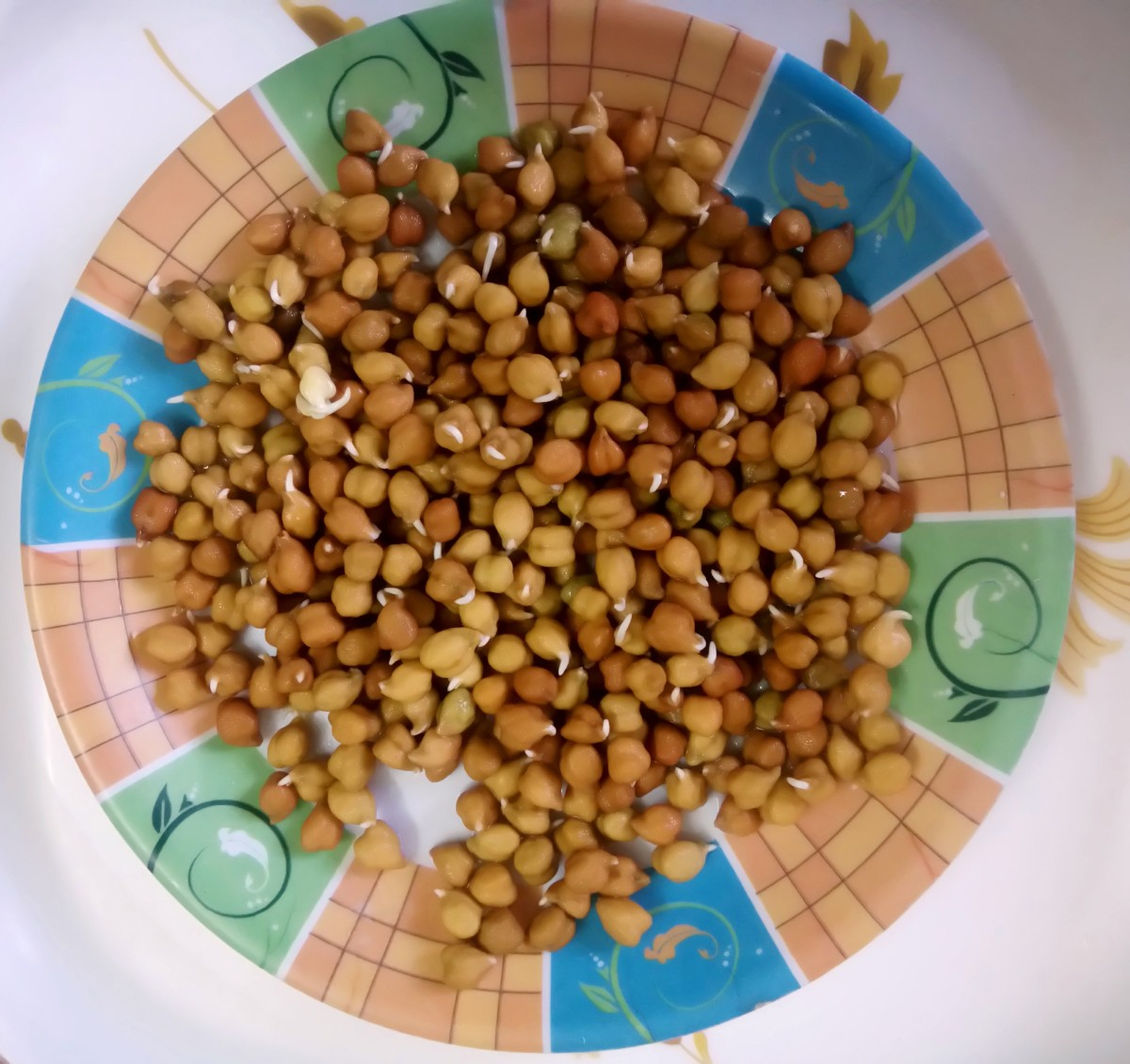 Black Chickpeas with Small Sprouts