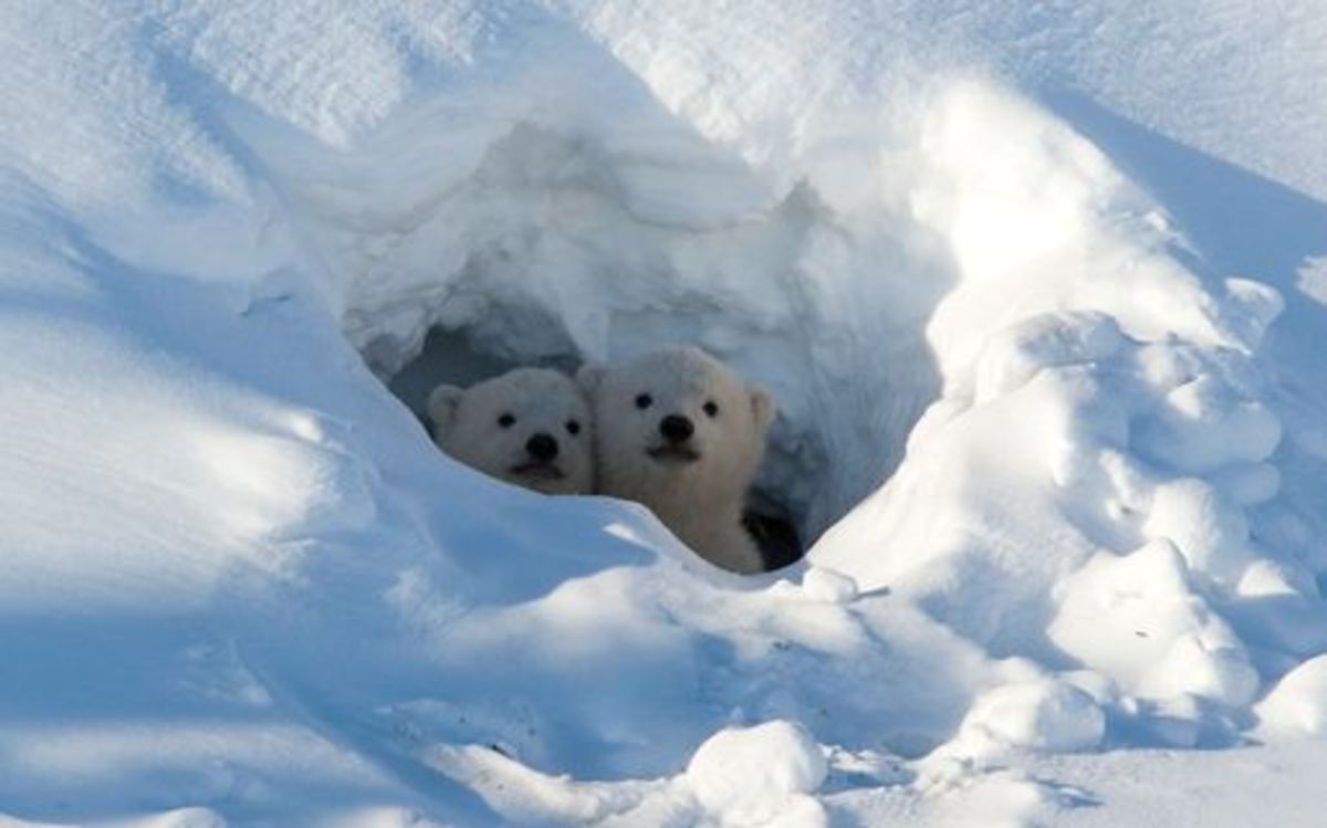 Cubs in their den