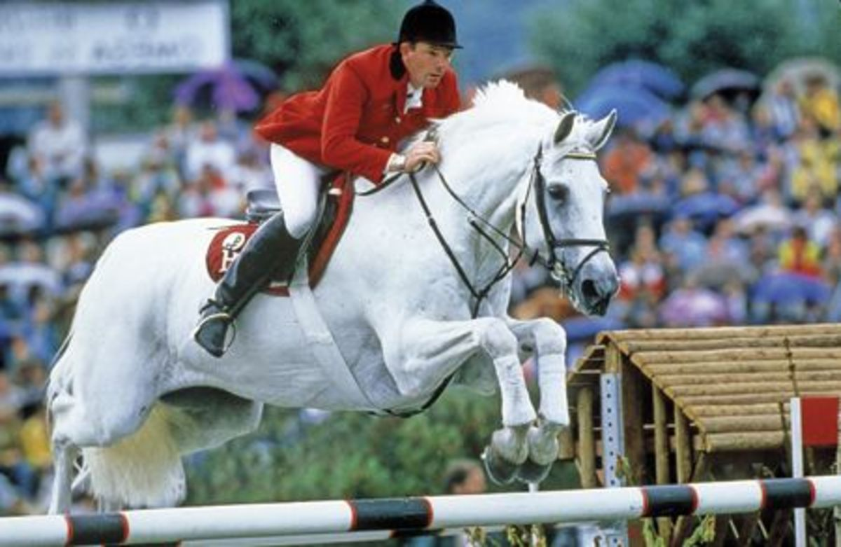 This is Milton, a famous show jumper I was obsessed with as a kid! Funny thing is, I don't care for grays now. I guess I just loved him because he had the same name as my Grandfather!