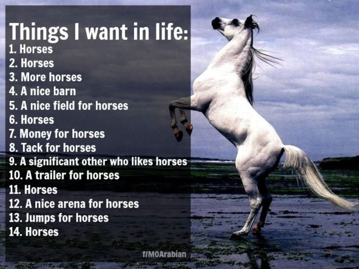 The wanting horses and horse stuff never goes away, it lasts through adulthood.