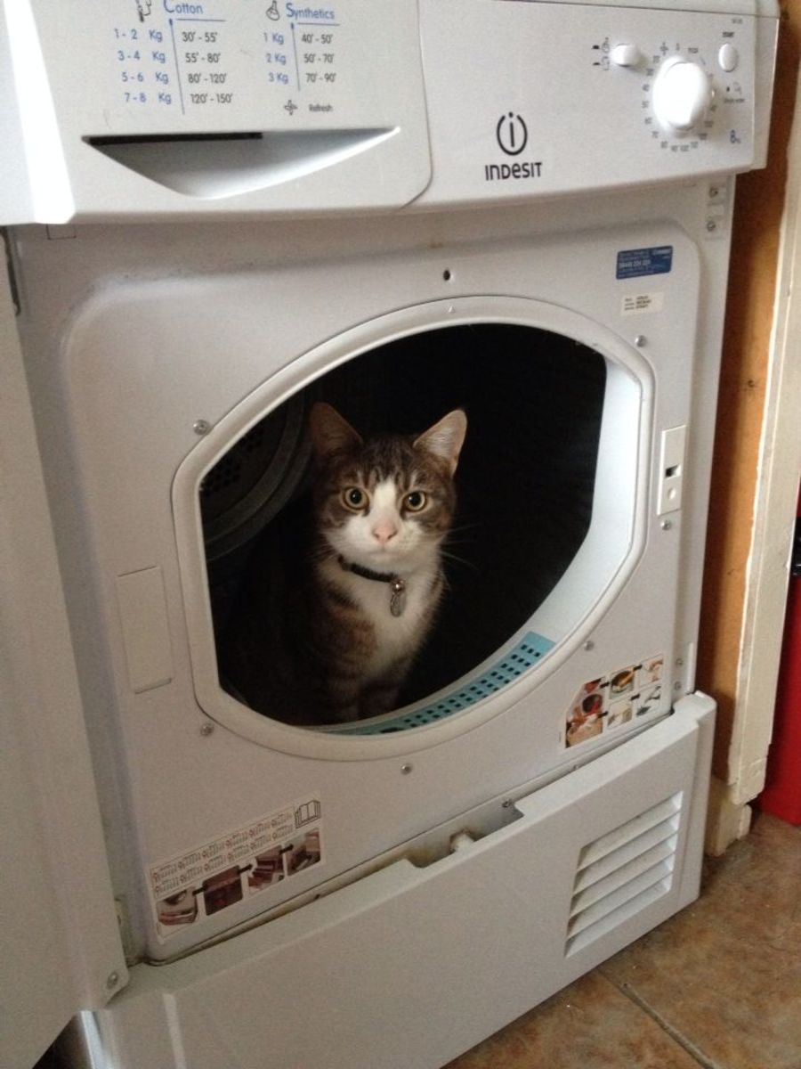 cat-in-the-dryer-warning