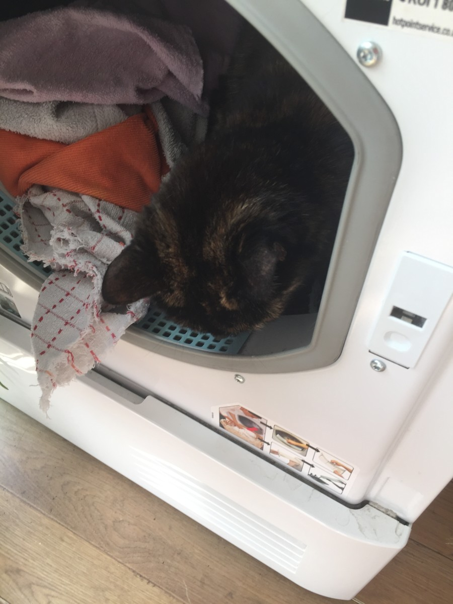 Cat in the Dryer Warning