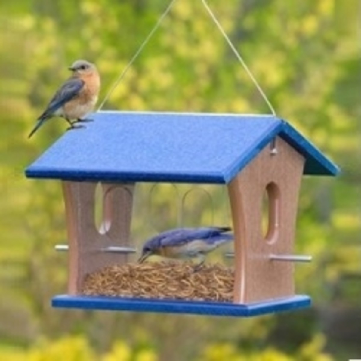 Duncraft Bluebird Feeder