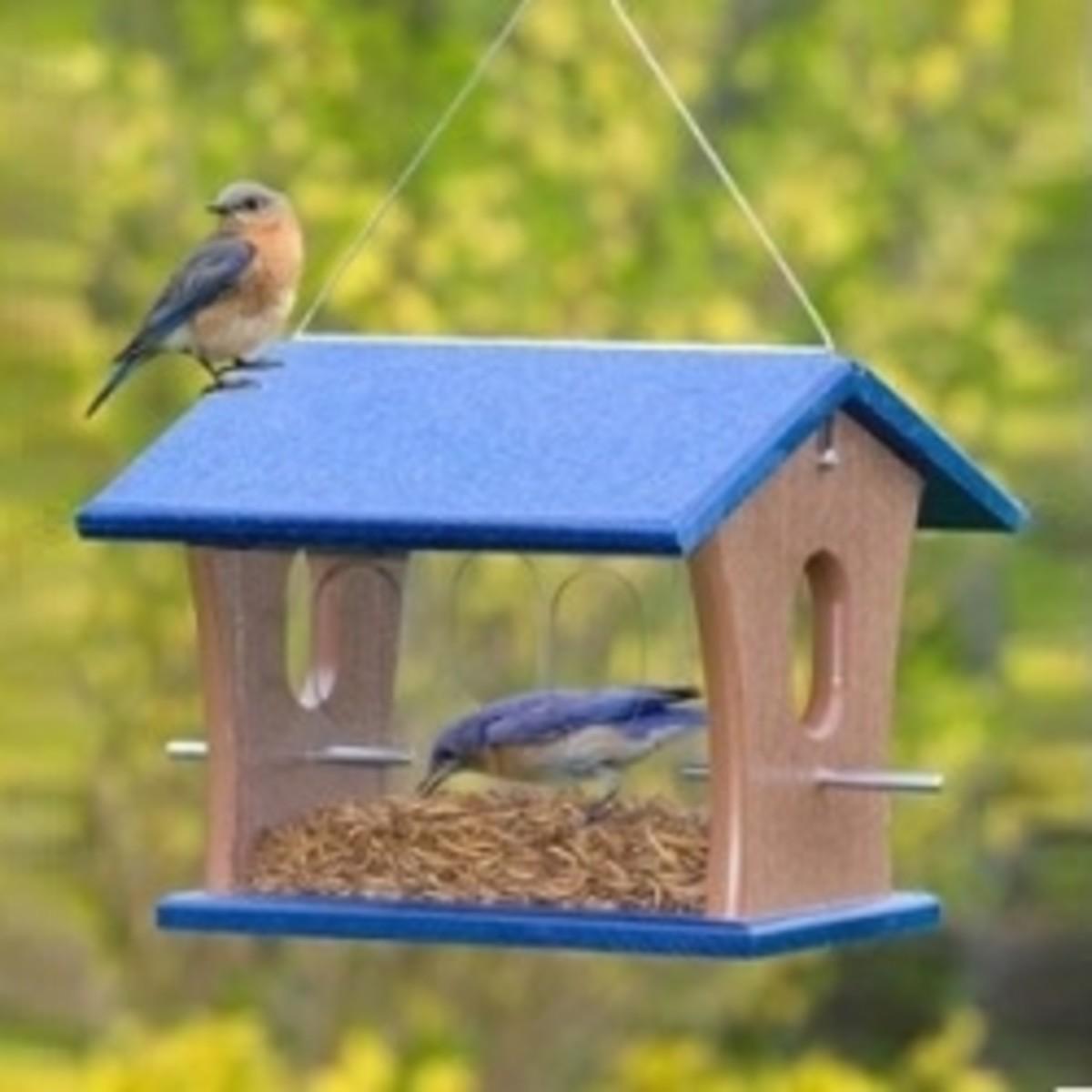Duncraft Bluebird Feeder