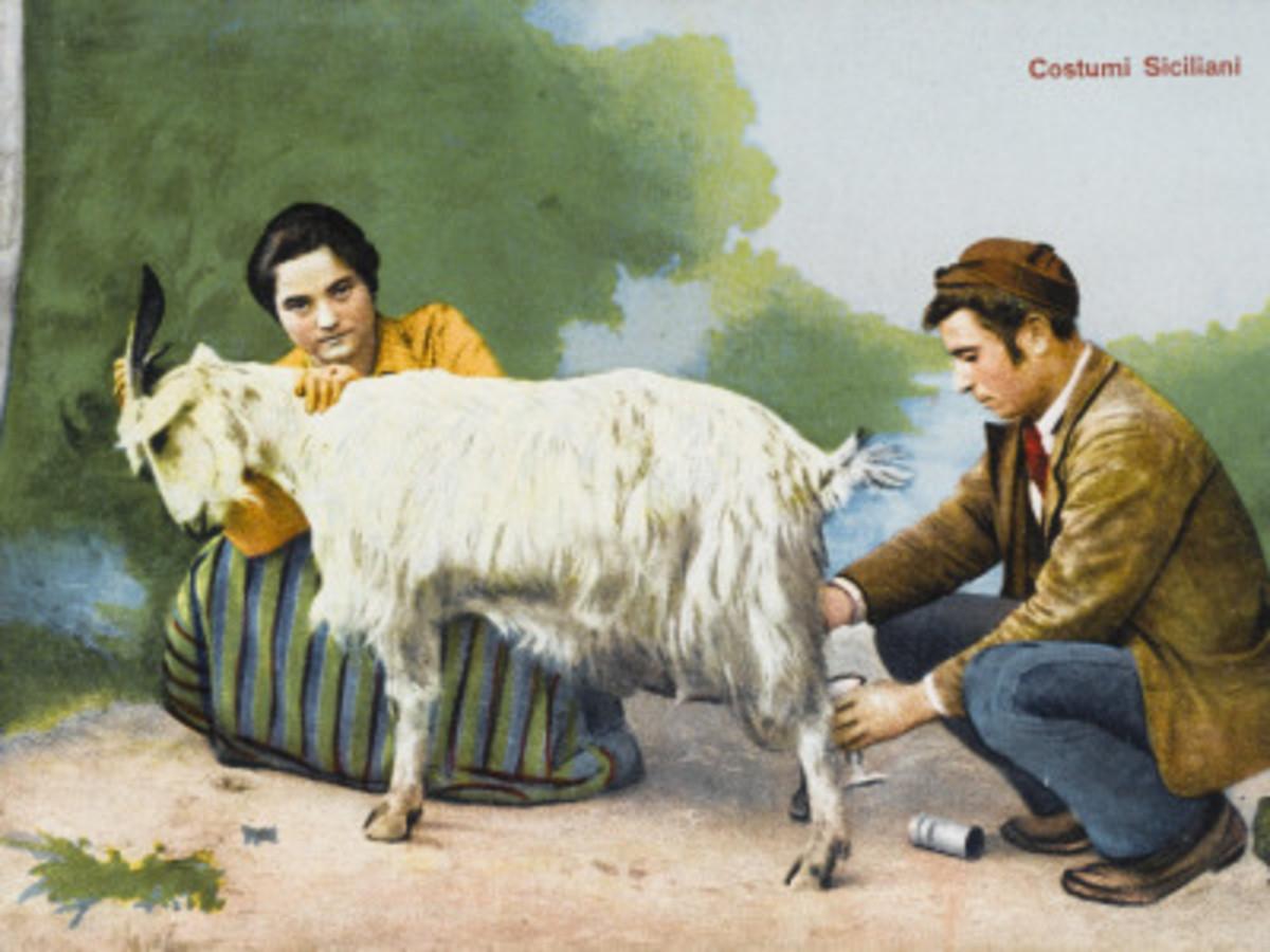 A Sicilian Couple Milk their Goat