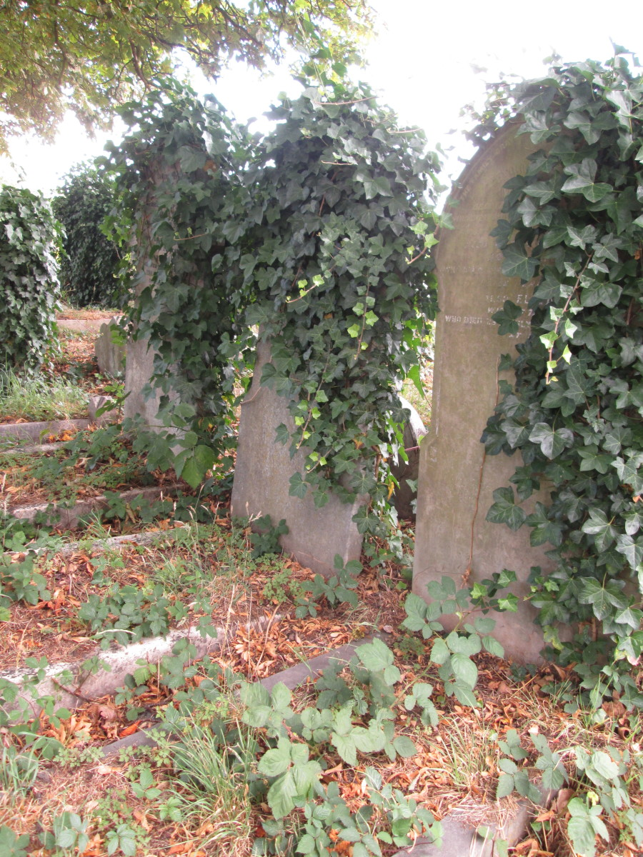 ... Some being overtaken by ivy where their 'neighbours' graves are untouched ...