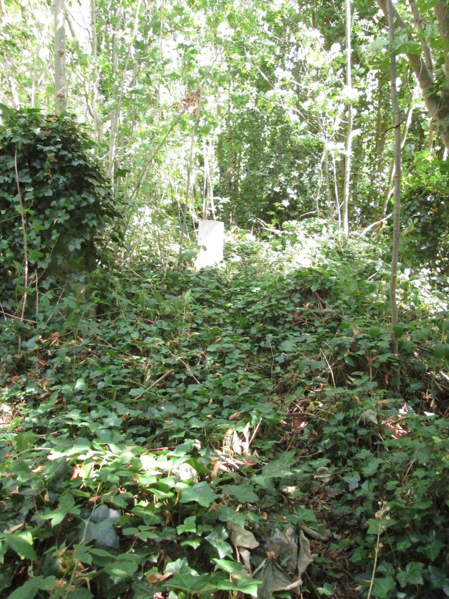 ... Ivy, thorns and weeds grow over headstones in abundance...