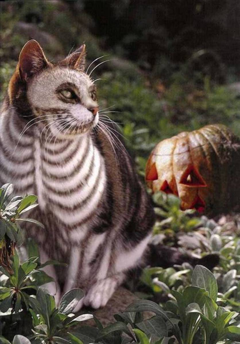 Skeletor Cat