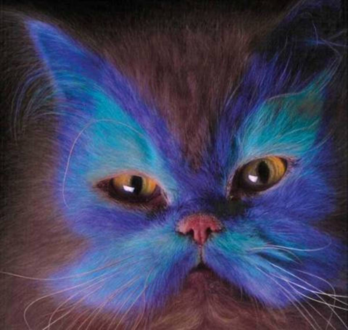 Smurf face Cat.