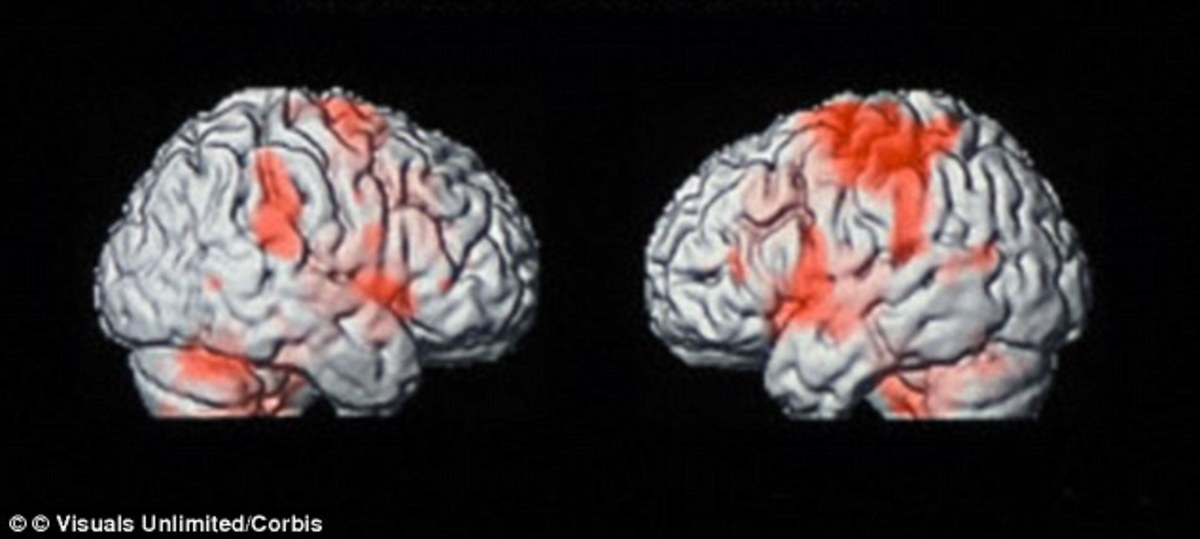 The scientists used an fMRI scans (similar to those pictured) to find that neural changes created by reading the novel were associated with physical sensation and movement systems - suggesting that reading a work of fiction can transport a person int