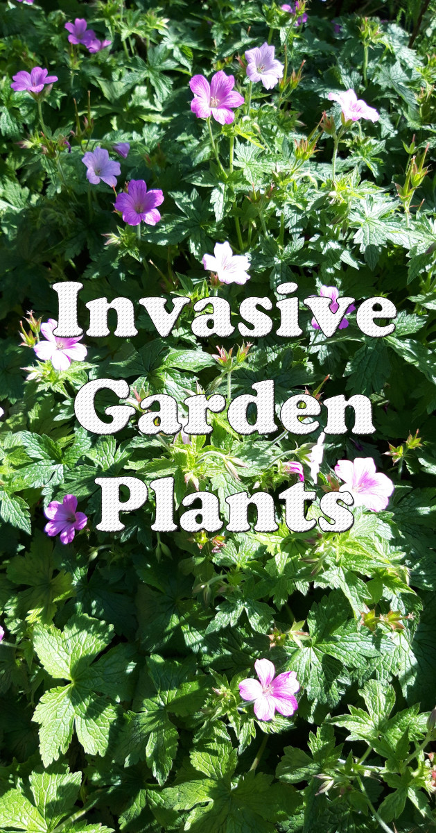 Invasive Garden Plants