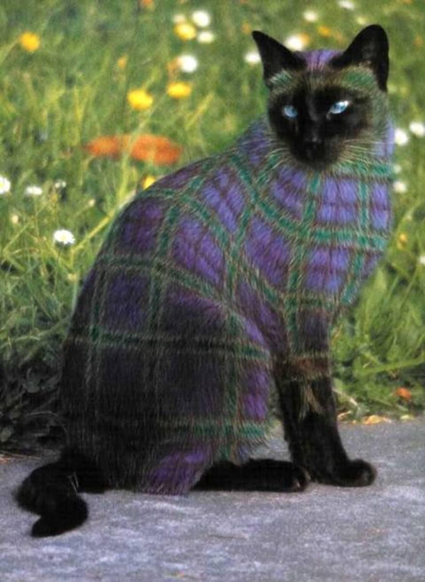 'I want a new owner' Cat.