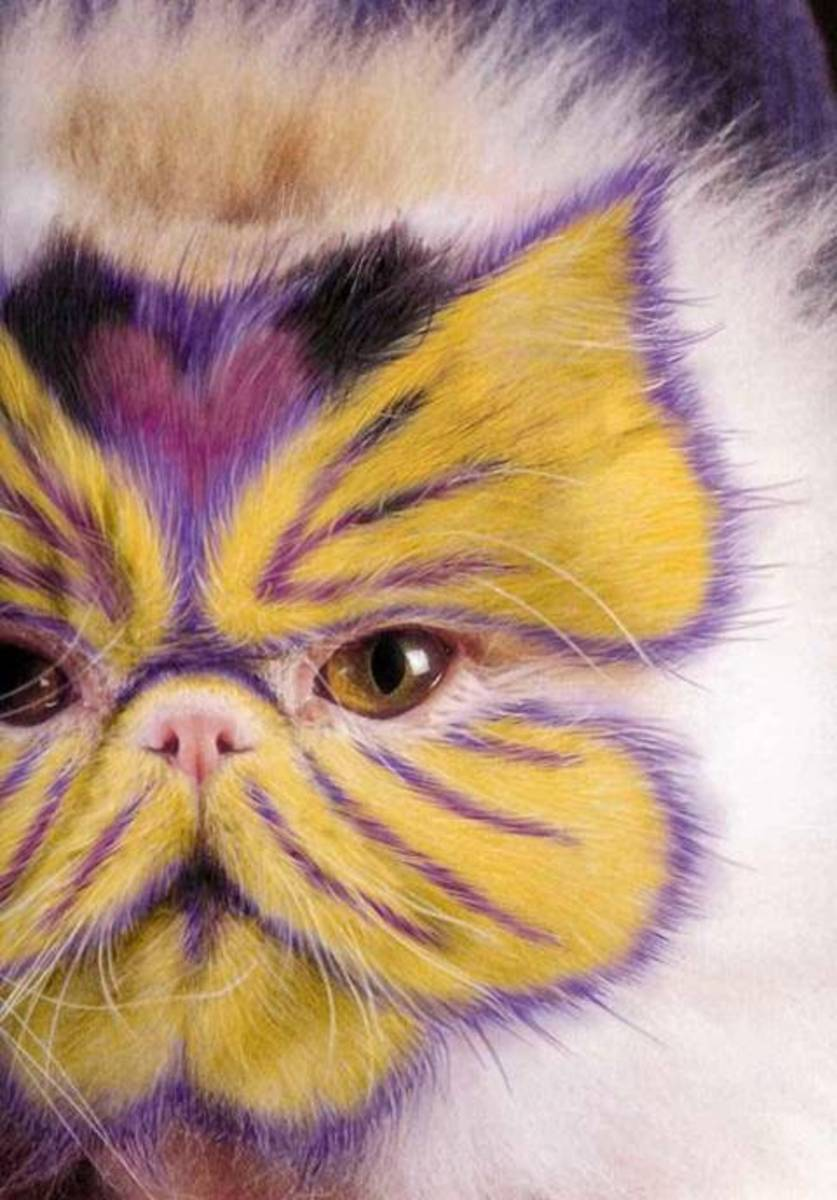 Jaundiced Cat.