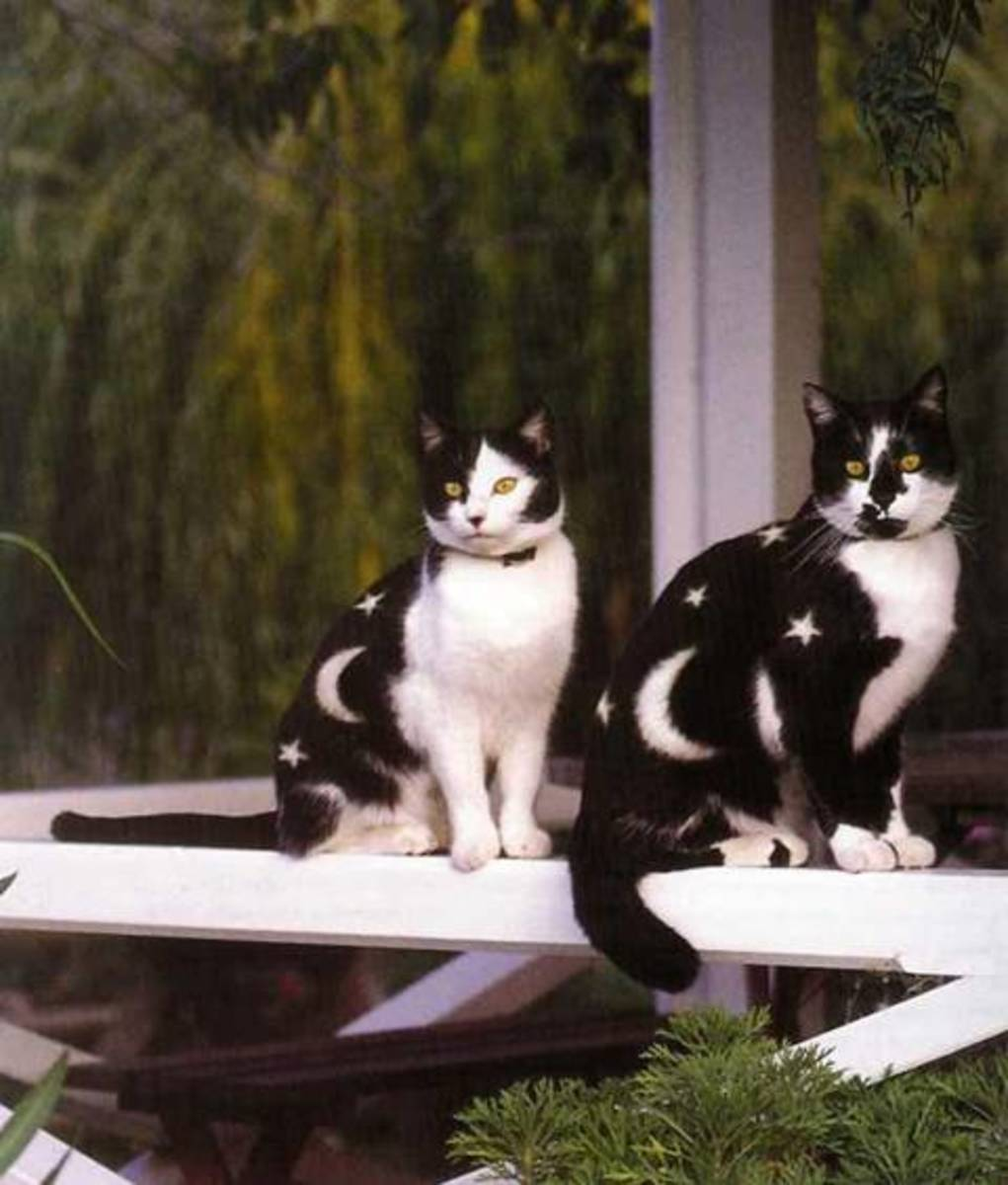'Well I suppose we look better than the other's!' Cats.