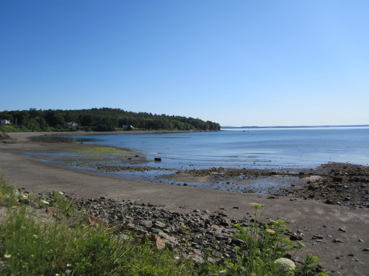 View of Hulls Cove, low tide.