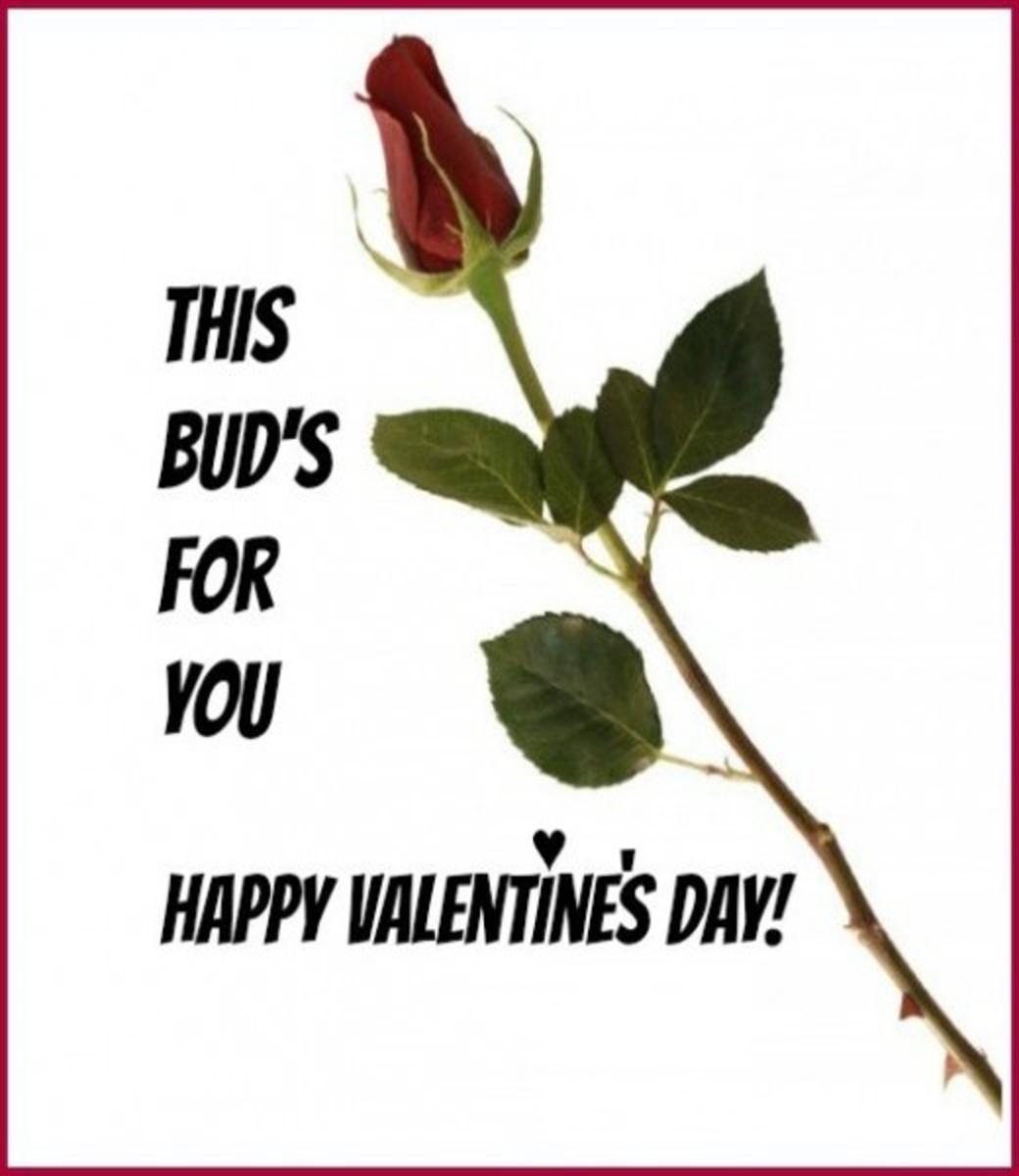 Funny Rosebud Valentine Card