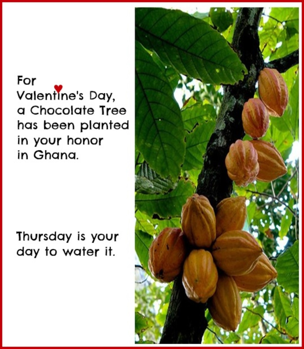 Funny Card about the Chocolate Tree