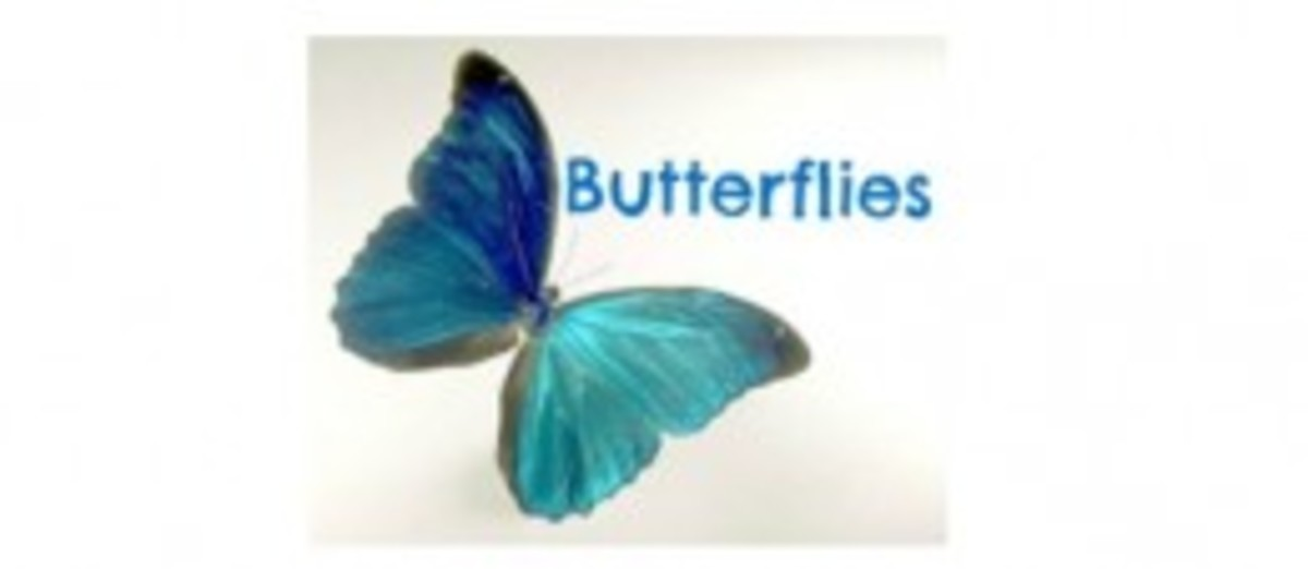 Pictures of Butterflies