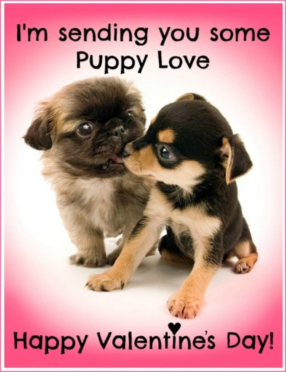 Puppy Love Funny Valentine's Day Card
