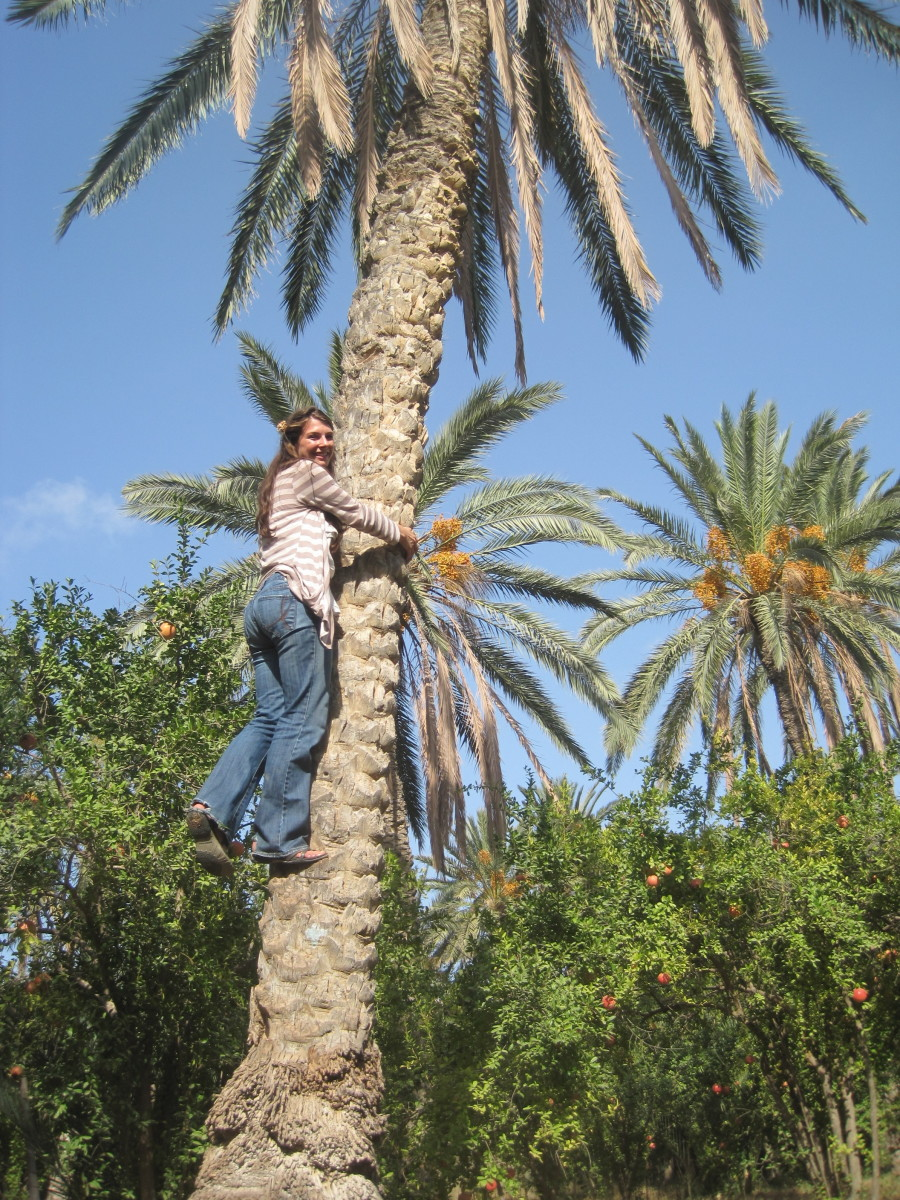 Levitate yourself and hug a palm this Arbor Day!