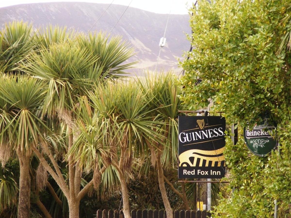 Southern Irish Coastal lands host Sabal Palms and these large Yuccas.