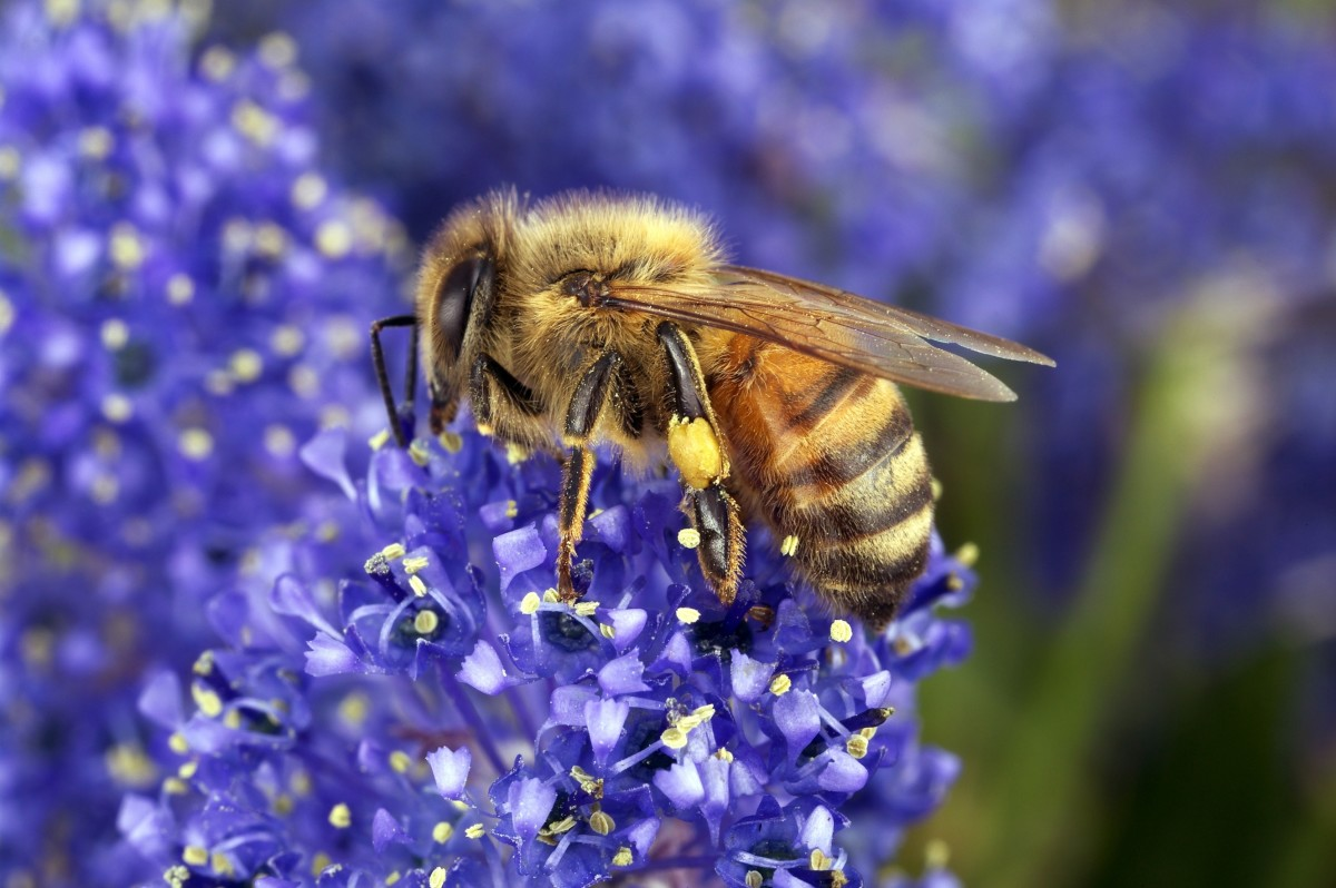 Hexagons, Bees, and God's Creative Word