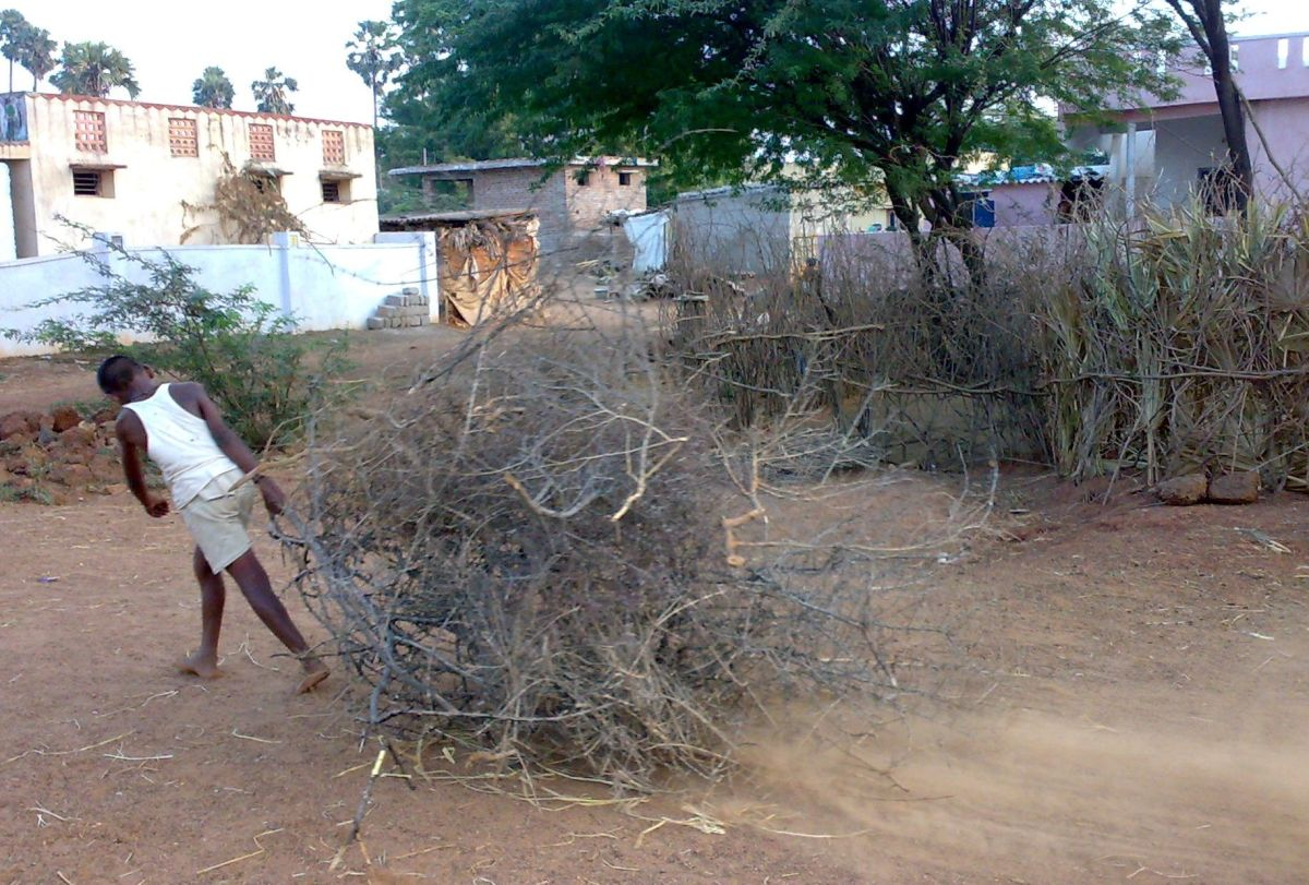 twigs being taken for the pongal bonfire