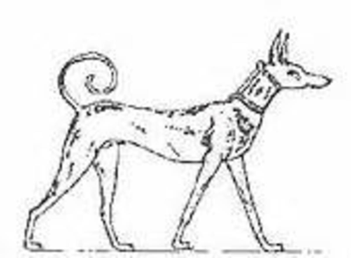 Image of Tesem dog from grave of Intel ii 2065BC