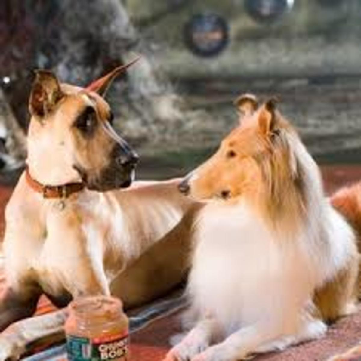 The dogs, Marmaduke and Jezebel in Marmaduke the movie.