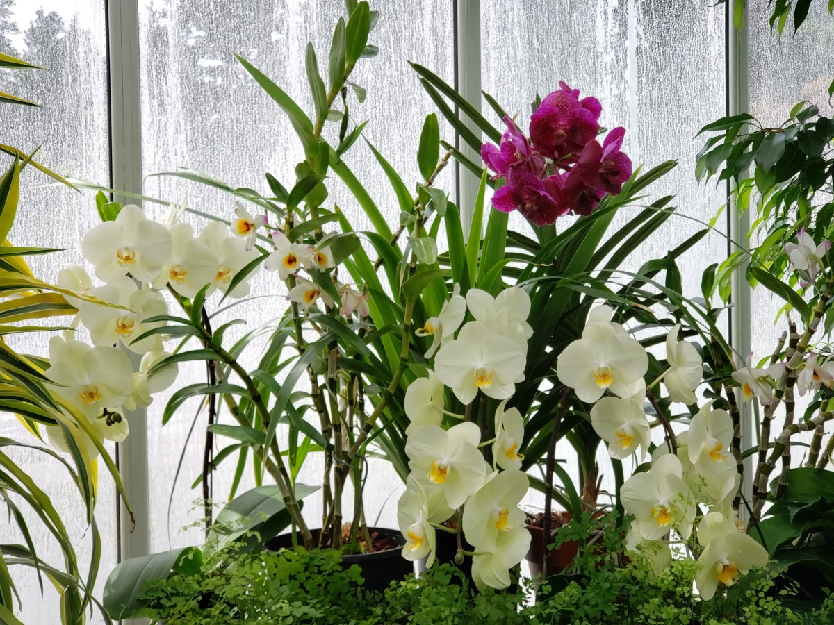 General care for orchids is a rewarding experience.