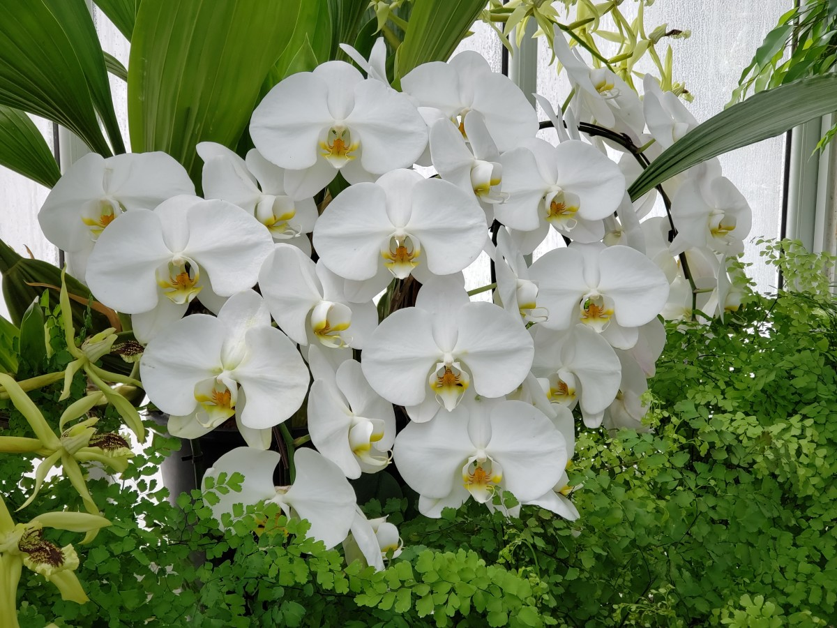 Caring for an orchid plant is a natural process, and there is nothing to fear.