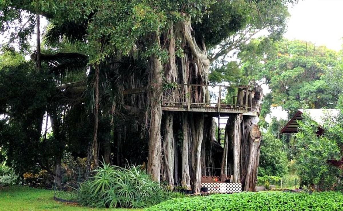 Kapa`au Banyan Tree House