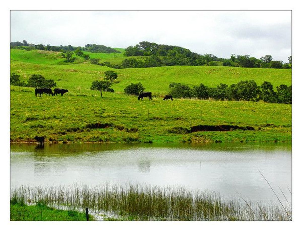 Parker Ranch Pasture - Yes we've noticed the resemblance to Ireland