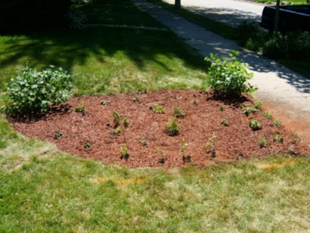 A Newly Planted Rain Garden