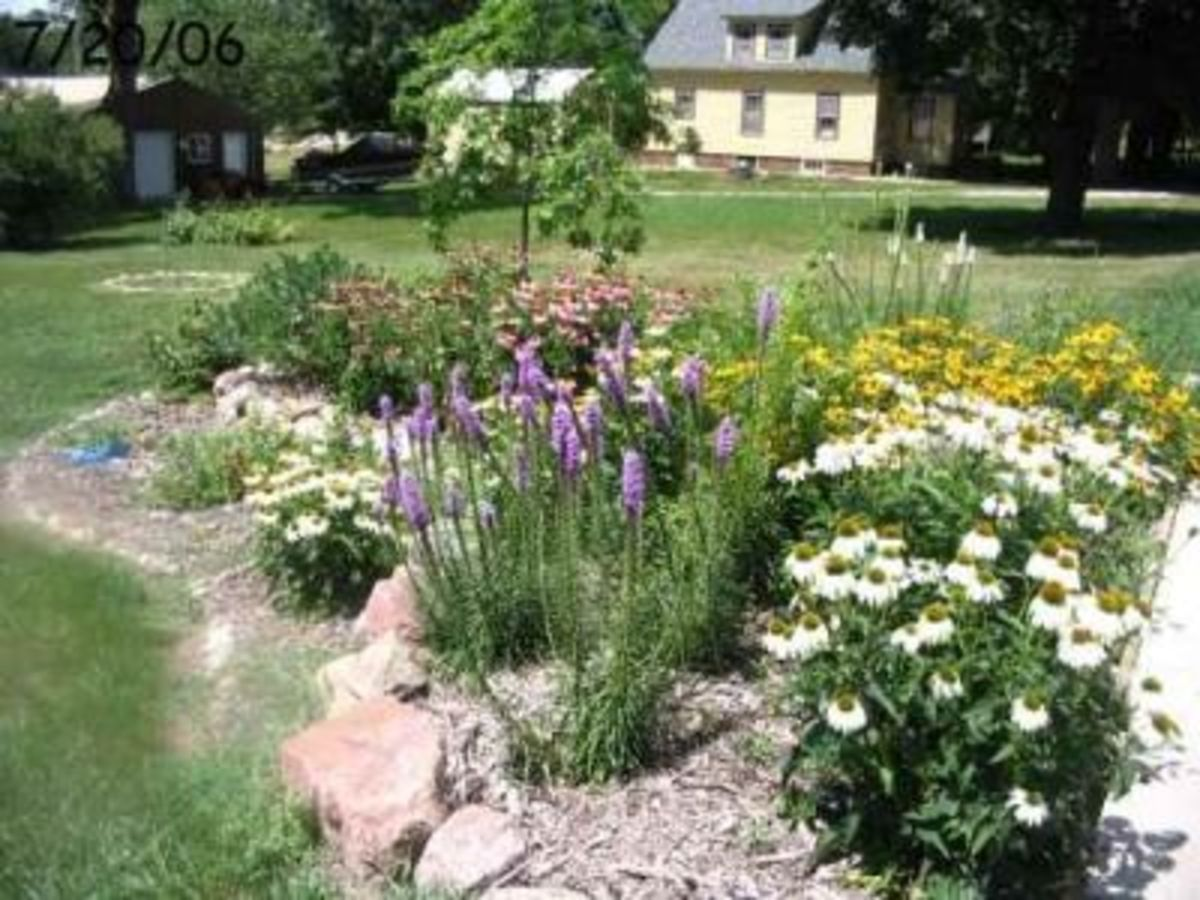 Just One Example Of A Rain Garden