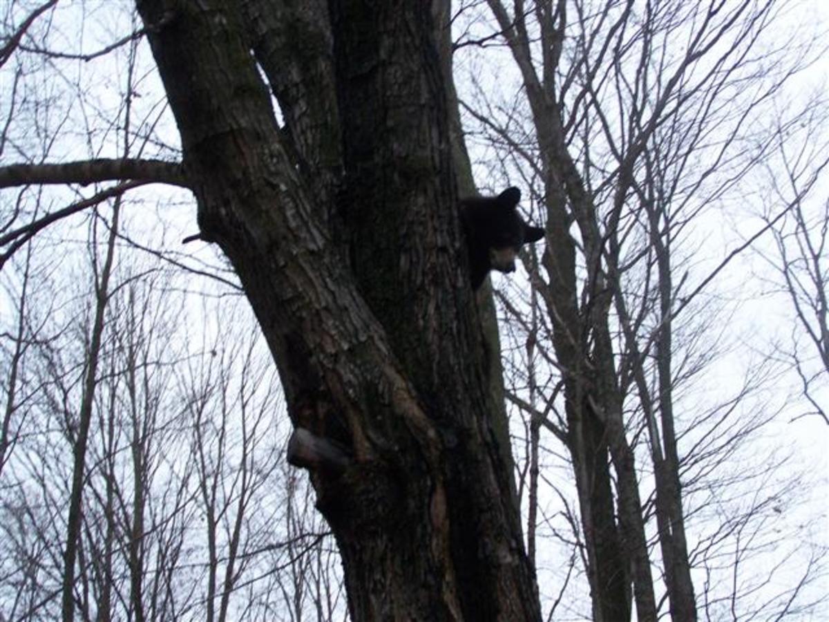 Nice Tree To Climb