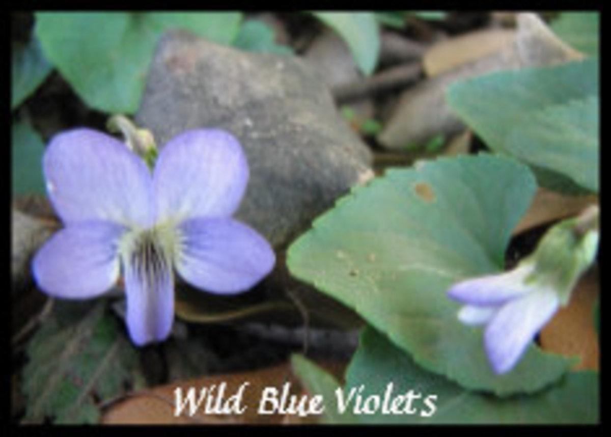 naturally_native_wildflower_gardens