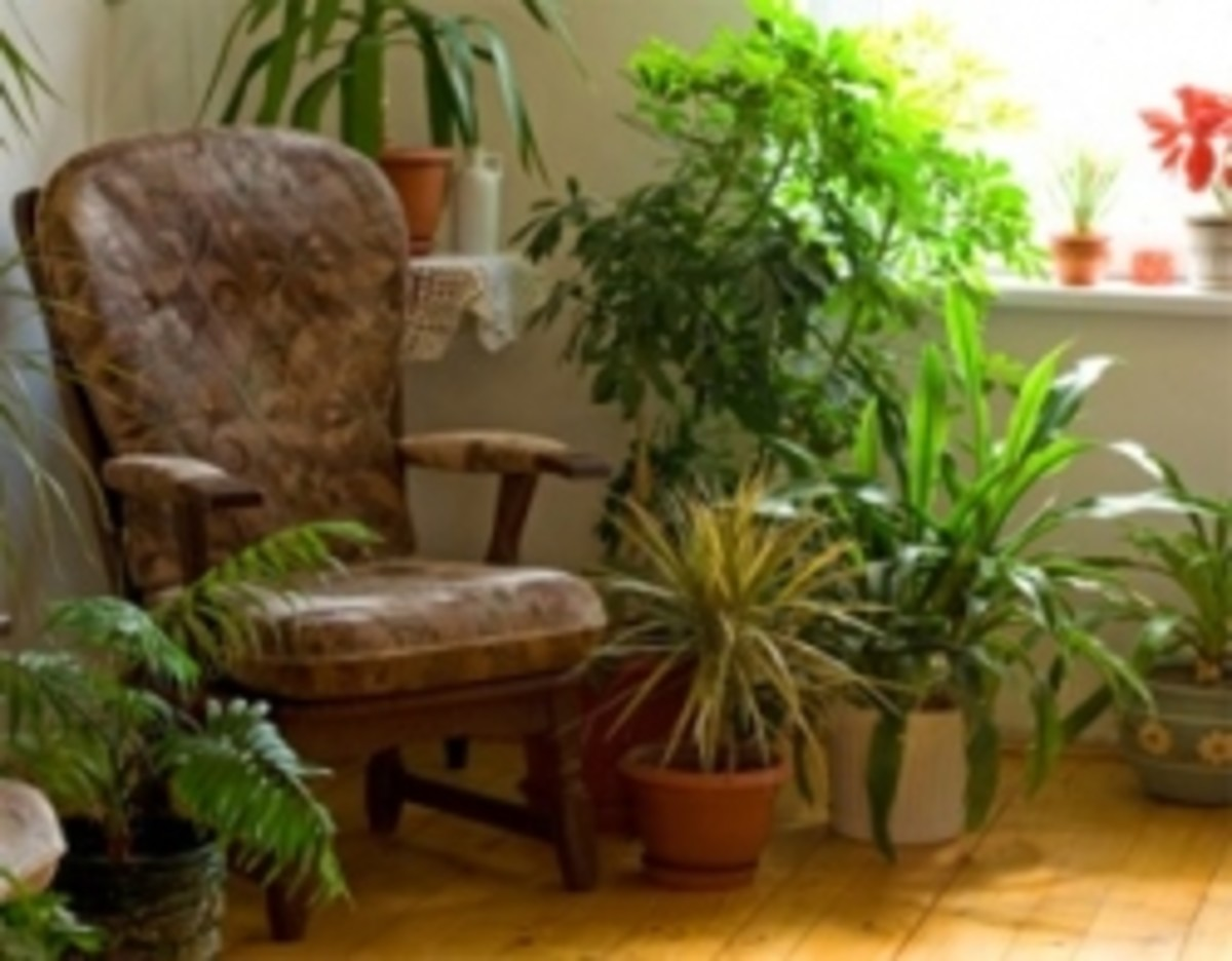 Houseplants and Their Benefits