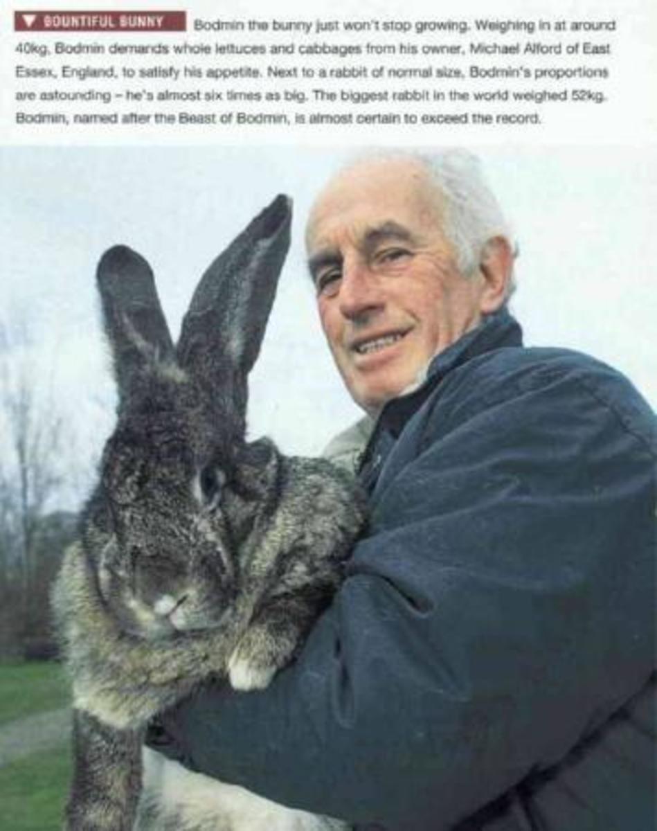 Keeping Flemish Giant Rabbits