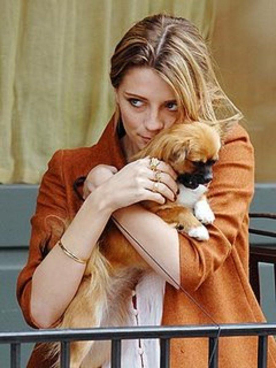 designer-dogs--celebrity-dogs