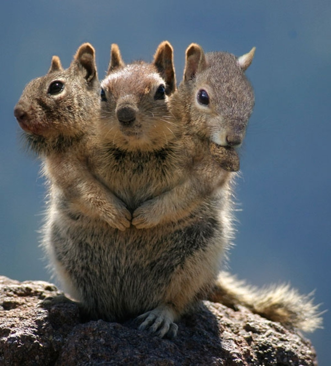 THREE HEADED SQUIRREL / Jazelmaarzowezen