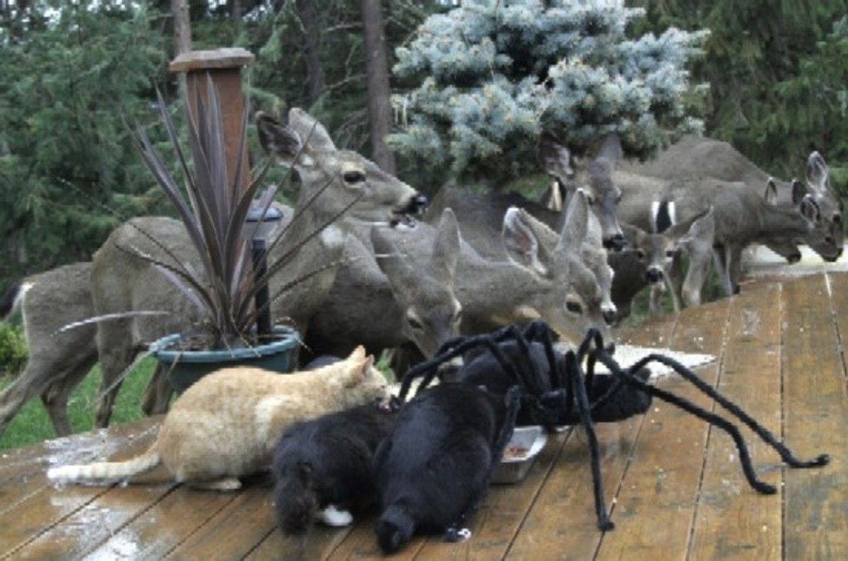 Giant Spider Feeds with other Pets