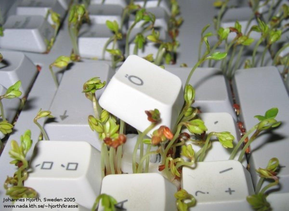 Seeds Grown in Keyboard