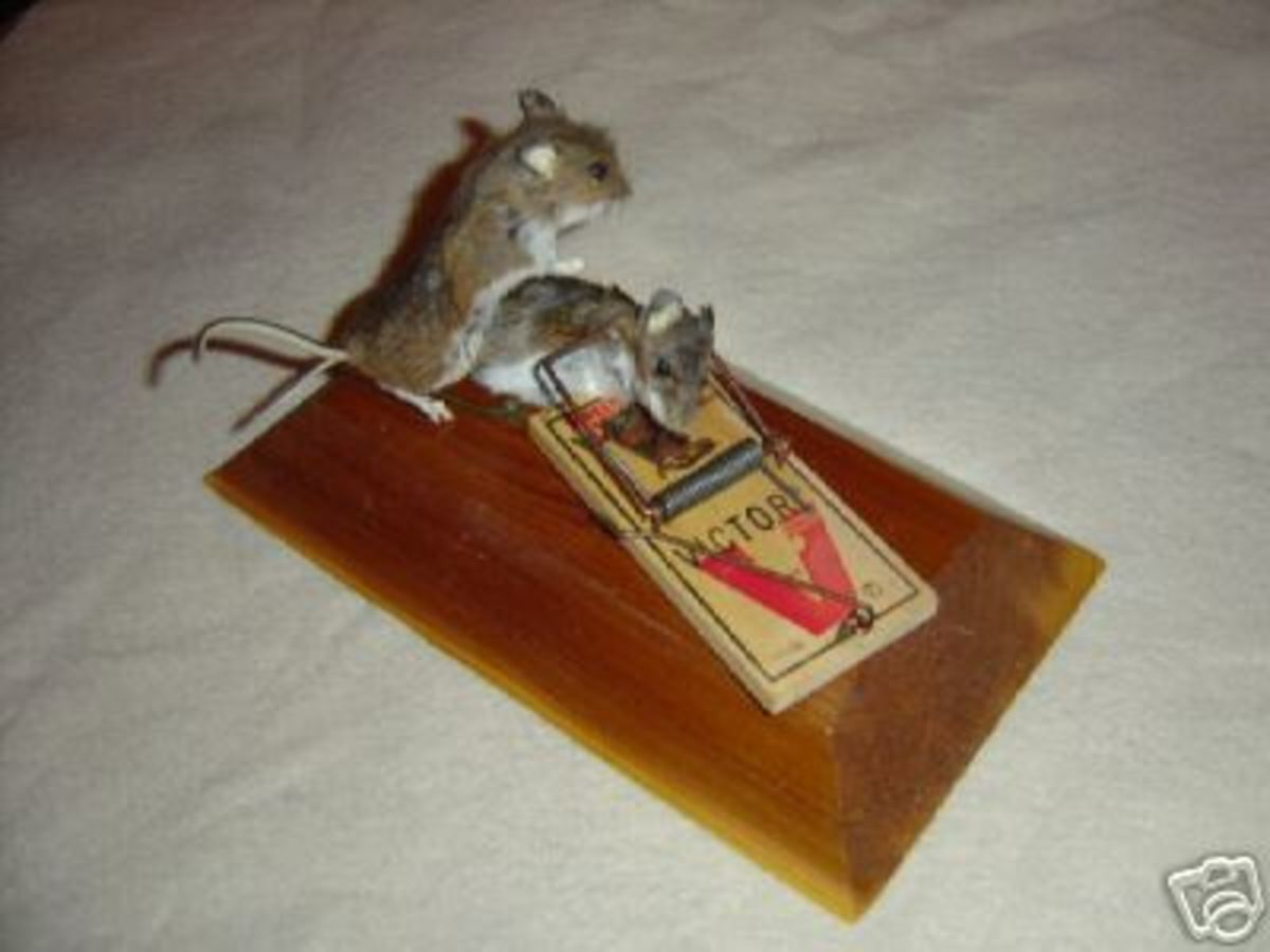 Mousetrap Love