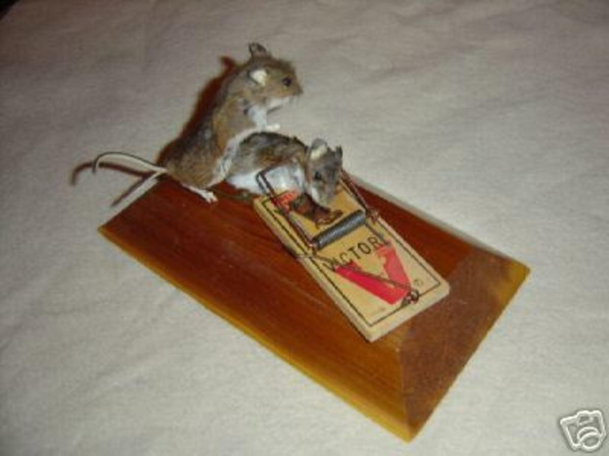 Mousetrap Love